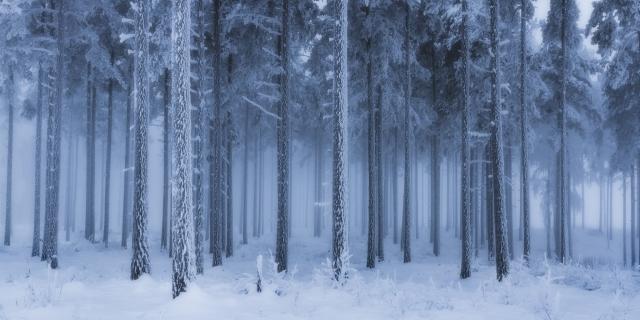 Fortryllet Skog