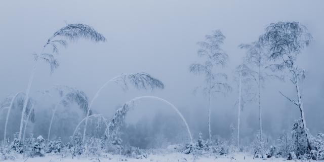 Føyer Seg For Vinteren